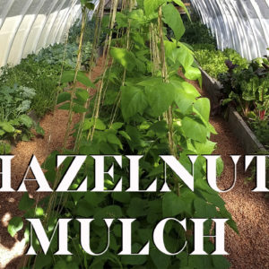 Using Hazelnut Shell Mulch in the Greenhouse