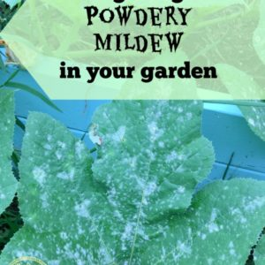 Fighting Powdery Mildew in your Garden