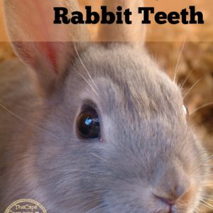 Caring for Rabbit Teeth
