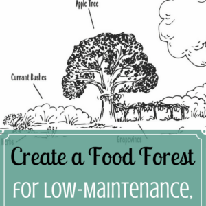 Create a Food Forest for Low-Maintenance, Edible Rewards
