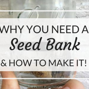 How to make your own SEED BANK!