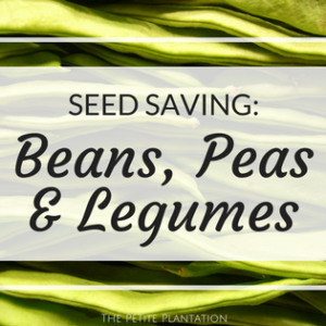 How to save Bean, Pea and Legume seeds!