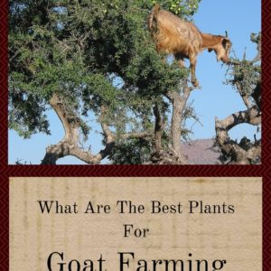 What Are The Best Plants For Goat Farming?