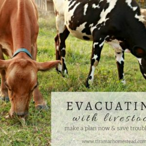 Make an Evacuation Plan for Your Livestock