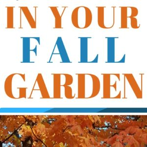 Top 9 Things To Do In Your Fall Garden