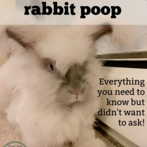 The Scoop on Rabbit Poop