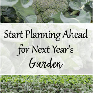 Planning Ahead for Next Year's Garden