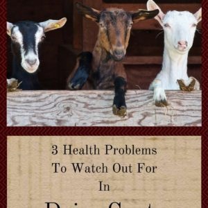 3 Health Problems To Watch Out For In Dairy Goats
