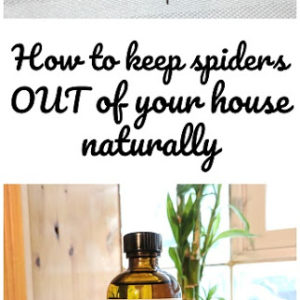 How to keep spiders out of your house…naturally