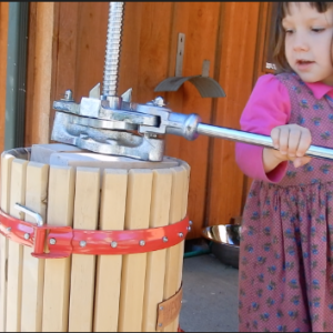 Pressing Homegrown Grapes for Juice