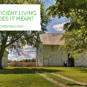 Self-Sufficient Living: What Does It Mean