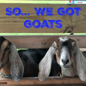 So…. We Got Goats