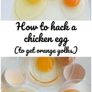 How to get your chickens to lay orange yolked eggs