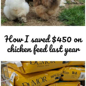 How I saved $450 on chicken feed last year