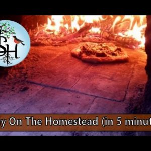 A Full Day On the Homestead in 5 Minutes (VIDEO!)