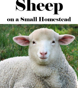 9 Reasons for Sheep on the Small Homestead