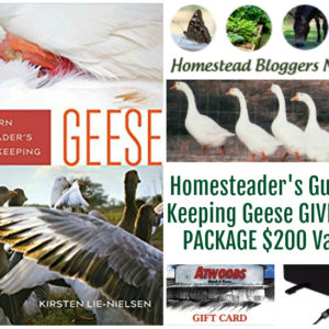 The Modern Homesteader's Guide to Keeping Geese Giveaway