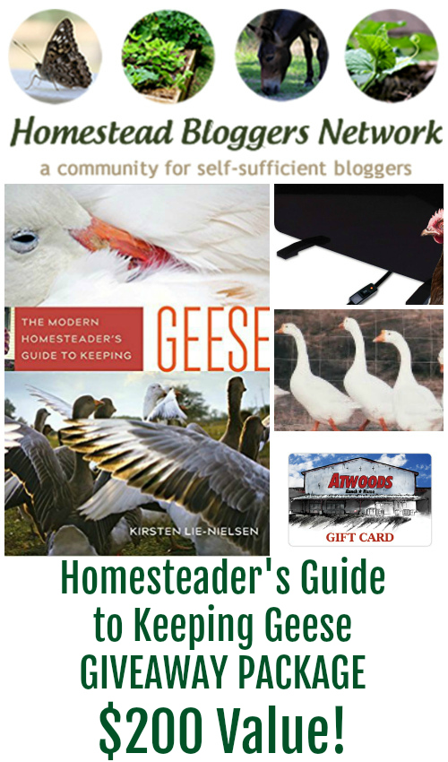 HBN Keeping Geese Package Giveaway - Get started with keeping geese today!