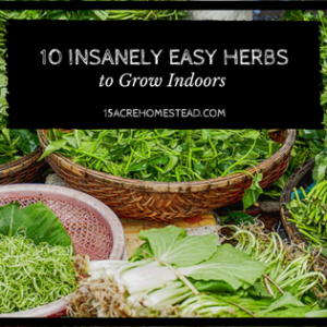 10 Insanely Easy Herbs to Grow Indoors