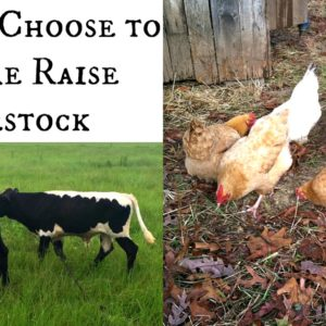 Why We Choose to Pasture Raise Livestock