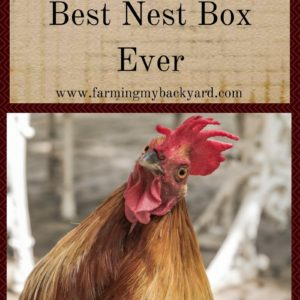 The Secret Trick To The Best Nest Box Ever