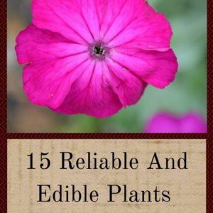 15 Reliable And Edible Plants For The Forgetful Gardener