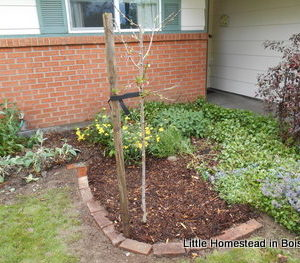How To Add A Fruit Tree To Your Existing Landscaping,