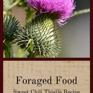 Foraged Foods: Sweet Chili Thistle Recipe