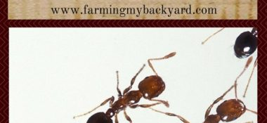 Here's How To Discourage Fire Ants In Your Garden