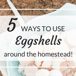 5 ways to use eggshells around the homestead!