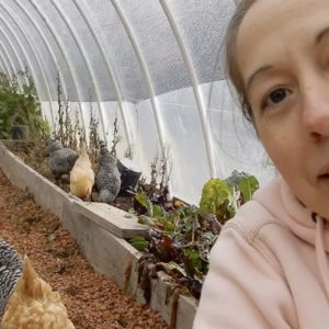 Using Chickens to Clean the Greenhouse