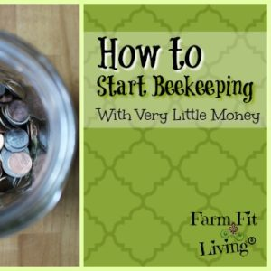 How to Possibly Start Beekeeping with Very Little Money