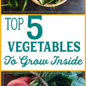 5 vegetables you can grow in pots indoors