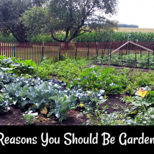 10 Reasons You Should Be Gardening!