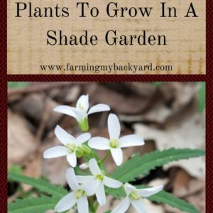 38 Edible and Useful Plants To Grow In A Shade Garden