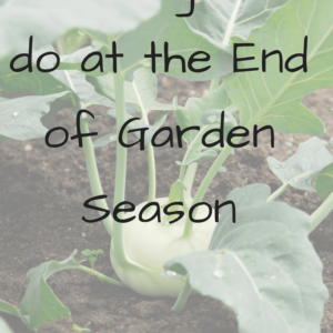 5 Things to do when Garden season is over
