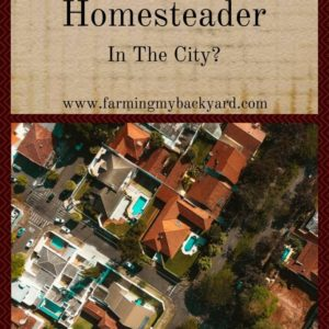 Can You Be A Homesteader In The City?