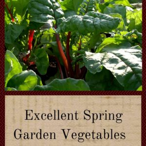 Excellent Spring Garden Vegetables For Small Spaces