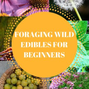 Foraging Wild Edibles For Beginners