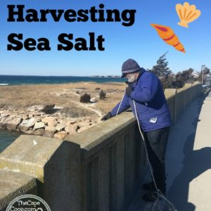 Foraging & Harvesting Sea Salt