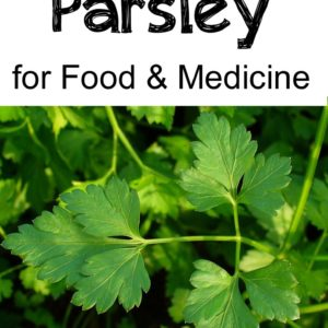 Growing & Using Parsley for Food & Medicine