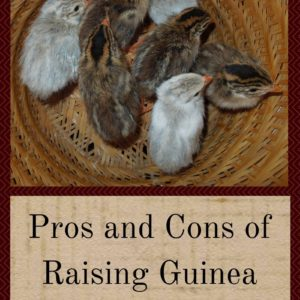 Pros and Cons of Raising Guinea Fowl