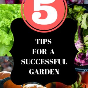 5 Tips For A Successful Garden