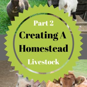 Creating Your Homestead : LIVESTOCK