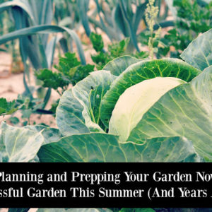 Start Planning and Prepping Your Garden Now For A Successful Garden This Summer (And Years After!)