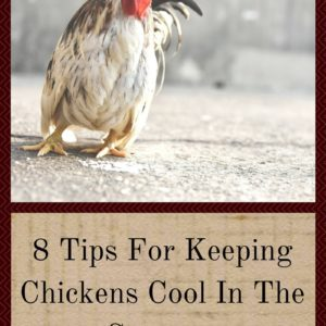 8 Tips For Keeping Chickens Cool In The Summer