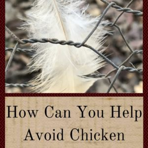 How Can You Help Avoid Chicken Illnesses?