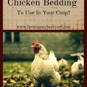 What Is The Best Chicken Bedding To Use In Your Coop?