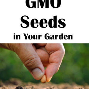 Why You Shouldn't Worry About GMO Seeds in Your Garden