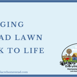Bringing A Dead Lawn Back To Life